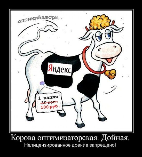 О коровах