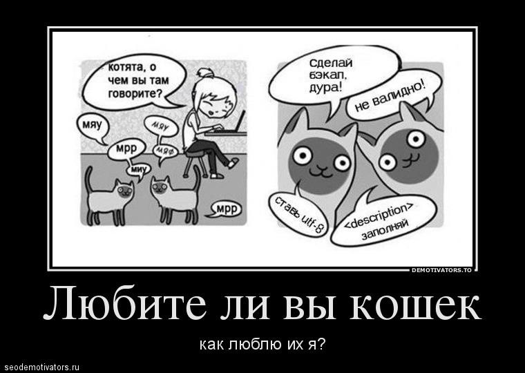 Любите ли вы кошек как люблю их я