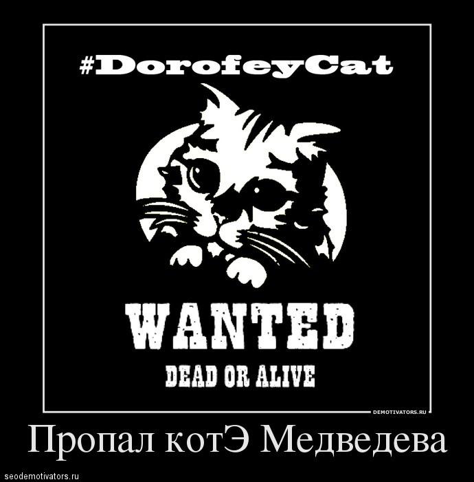 Пропал котЭ Медеведева