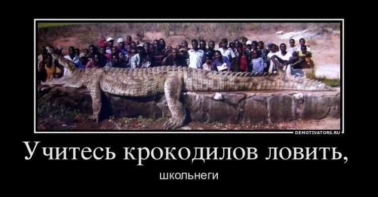 Учитесь крокодилов ловить, школьнеги