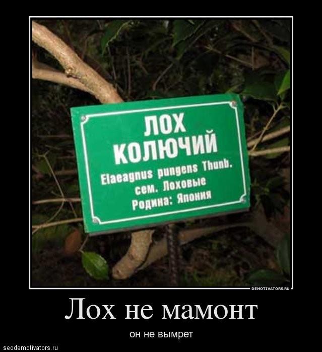 Лох не мамонт
